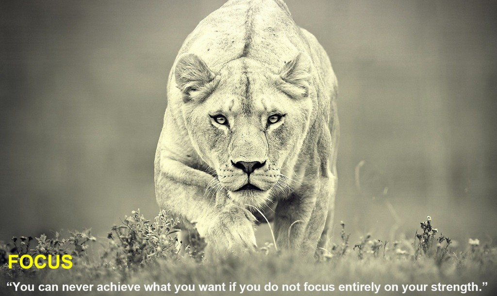 lion-focus1-001