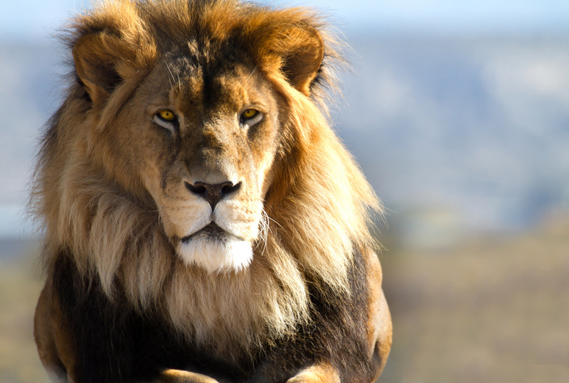 The 21 Steps To Becoming An Alpha Male